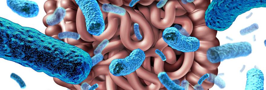Maigrir avec les probiotiques
